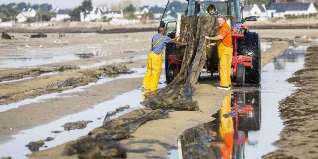 ramassage des filets avec un tracteur sur la plage