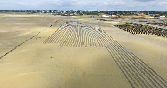 parcs sur le sable à carnac